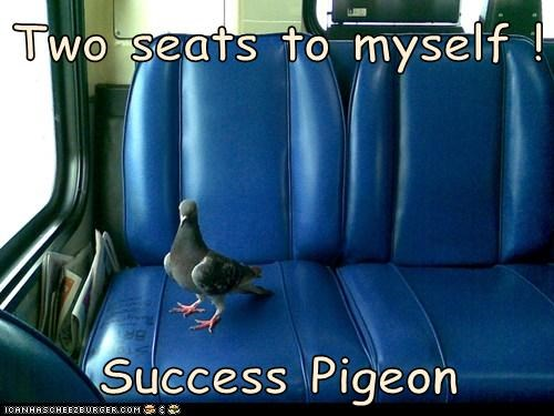 pigeon,by myself,seats,success,riding,sitting,bus