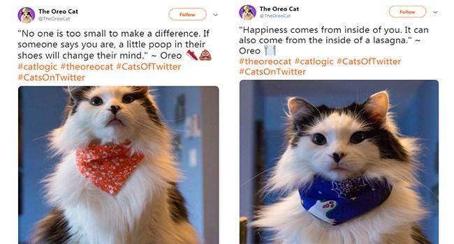 Philosophical Oreo Cat