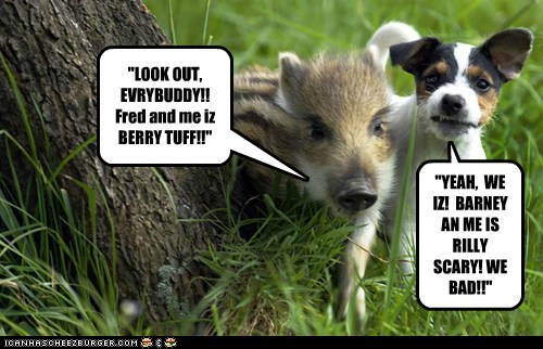 """LOOK OUT, EVRYBUDDY!! Fred and me iz BERRY TUFF!!"""