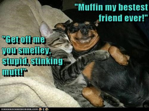 """Muffin my bestest                                                     friend ever!"" ""Get off me                                                     you smelley,                                                      stupid, stinking"