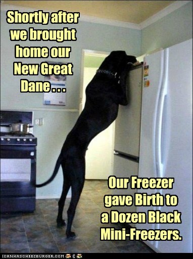 Shortly after we brought home our New Great Dane . . . Our Freezer gave Birth to a Dozen Black Mini-Freezers.