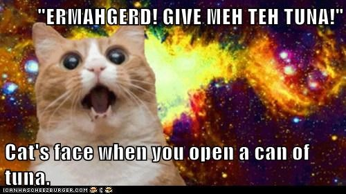 """ERMAHGERD! GIVE MEH TEH TUNA!""  Cat's face when you open a can of tuna."