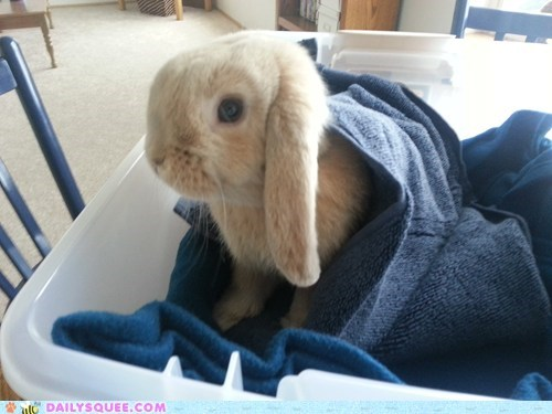 Bunday bunnies reader squee blanket squee rabbits - 7006762496