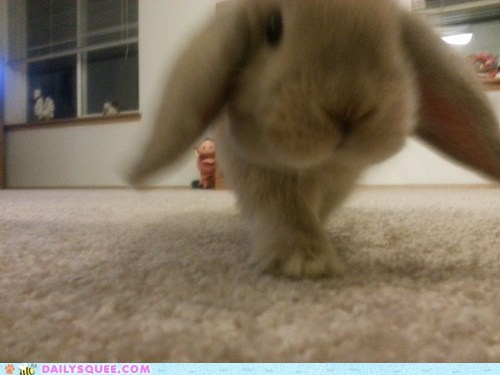 Bunday bunnies reader squee pets squee rabbits - 7006769920