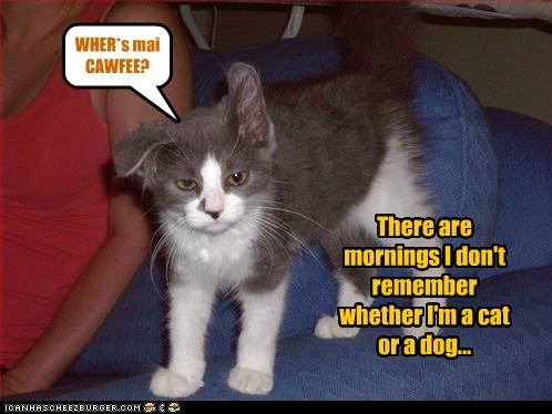 There are mornings I don't remember whether I'm a cat or a dog... WHER*s mai CAWFEE?