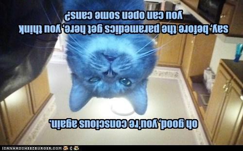 Cheezburger Image 7006903552