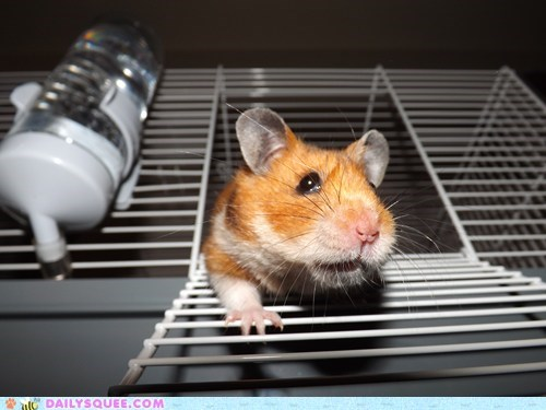escaping reader squee pets hamsters squee - 7006926592