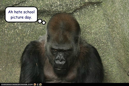 hate,school pictures,gorillas,grumpy,angry