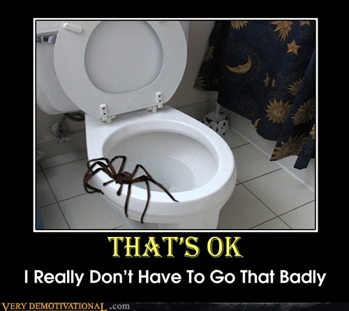 scary,wtf,spider,toilet