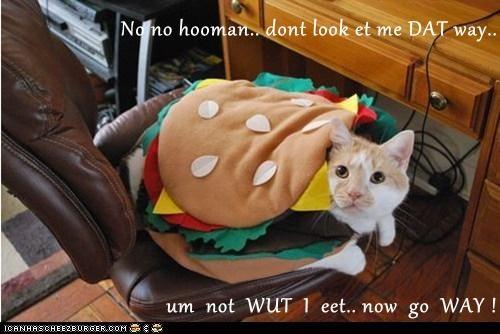 No no hooman.. dont look et me DAT way.. um not WUT I eet.. now go WAY !