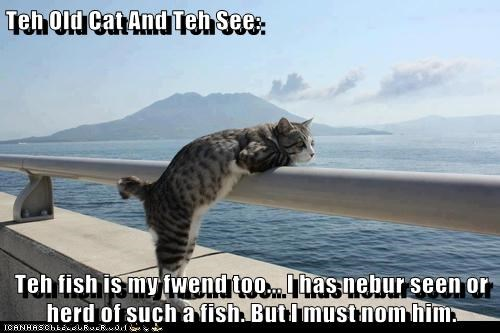 Teh Old Cat And Teh See: Teh fish is my fwend too... I has nebur seen or herd of such a fish. But I must nom him.