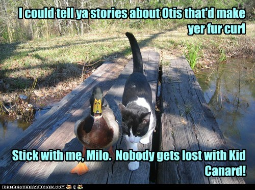 I could tell ya stories about Otis that'd make yer fur curl Stick with me, Milo. Nobody gets lost with Kid Canard!