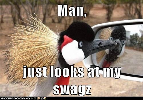 mirror,birds,swag,car