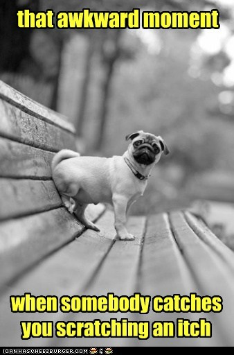 dogs scratching Awkward Moment itch pugs bench - 7007881216