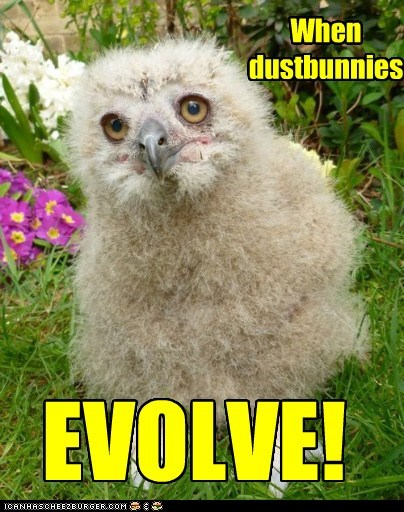 dust bunnies,birds,Evolve