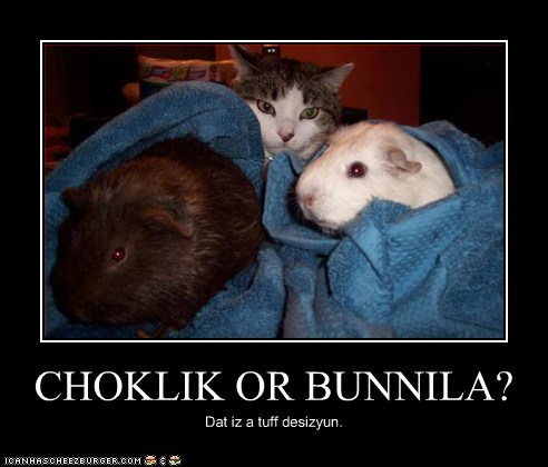 guinea pigs vanilla chocolate flavors eating Cats