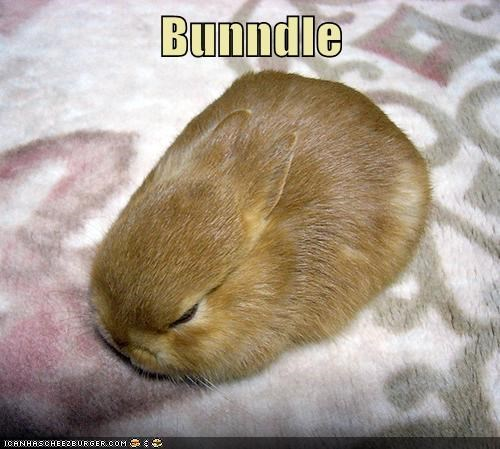 bunnies,puns,bundle