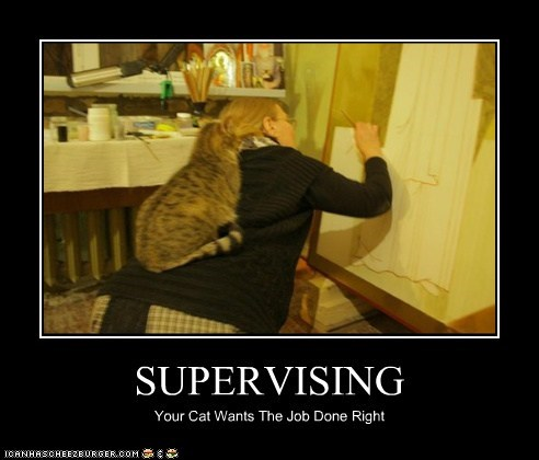 SUPERVISING Your Cat Wants The Job Done Right