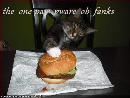 Cheezburger Image 7009268992