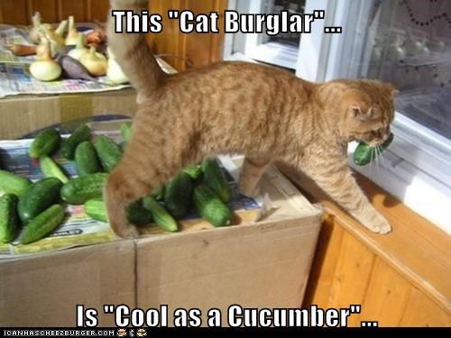 Cheezburger Image 7009314560