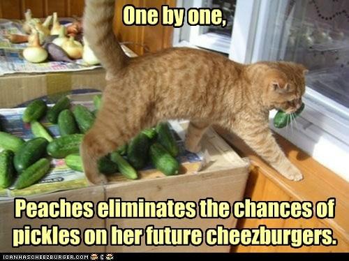Cheezburger Image 7009395200
