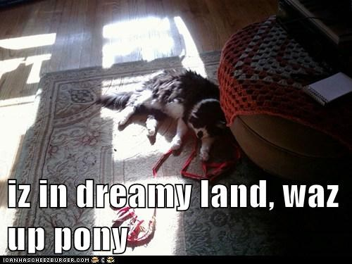 iz in dreamy land, waz up pony