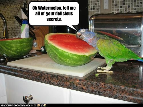 Oh Watermelon, tell me all of your delicious secrets.