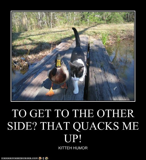 TO GET TO THE OTHER SIDE? THAT QUACKS ME UP! KITTEH HUMOR