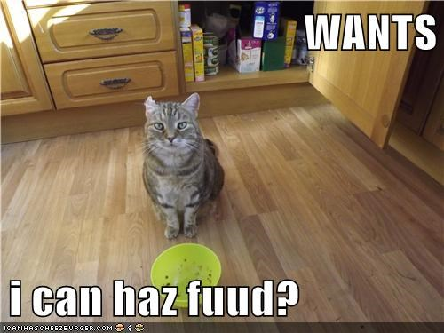 WANTS  i can haz fuud?