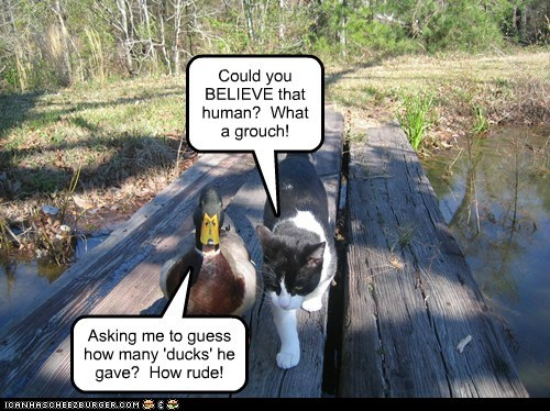 Could you BELIEVE that human? What a grouch! Asking me to guess how many 'ducks' he gave? How rude!
