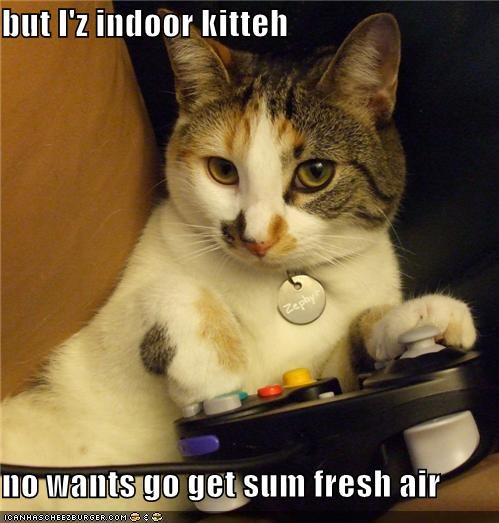 fresh air indoor lolcats nintendo video game