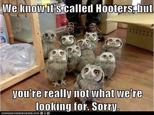 job puns owls hooters confused - 7010198528
