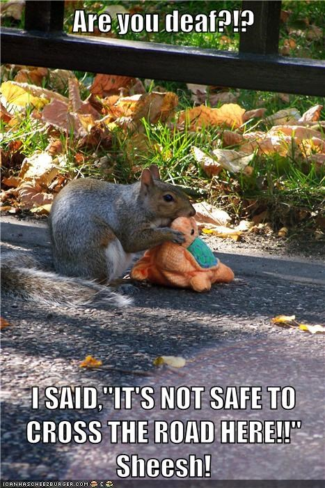 stuffed animals,safe,turtles,crossing the road,squirrels,deaf