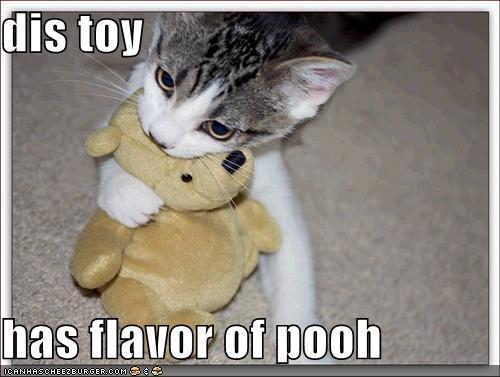 cute flavor kitten lolcats lolkittehs pooh - 701086976