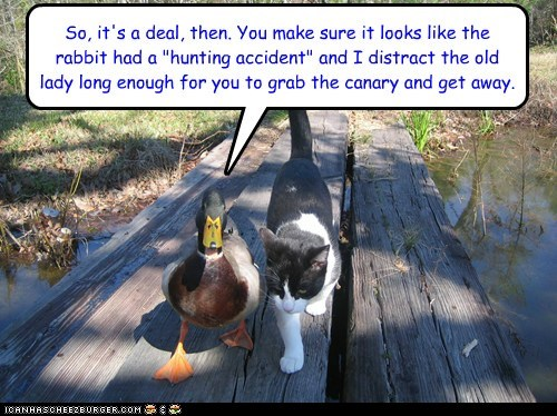 deal,looney tunes,accident,ducks,Cats