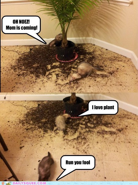 Messy Ferrets