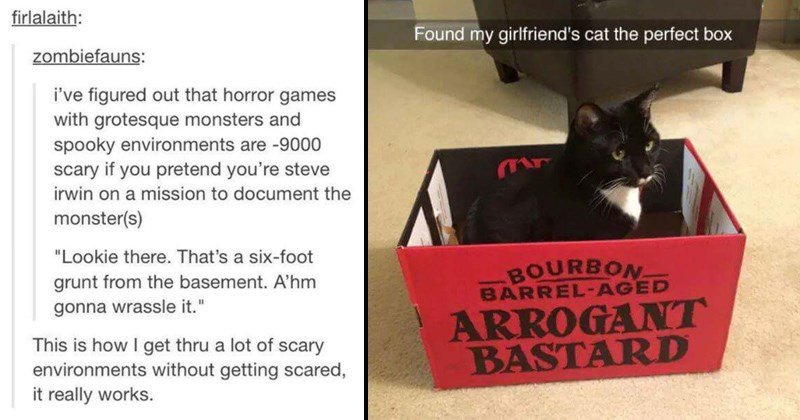 Black and white cat sitting in an empty bourbon box labeled arrogant bastard, photo is titled found my girlfriend's cat the perfect box