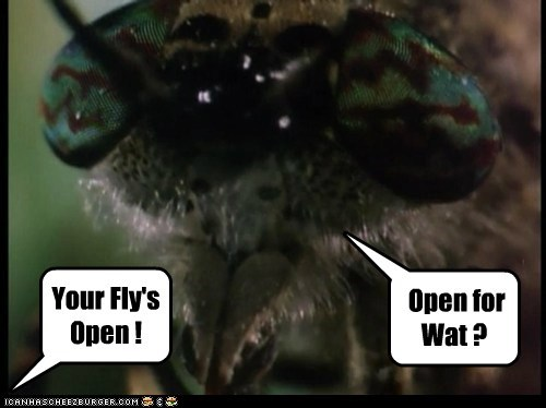 Your Fly's Open ! Open for Wat ?