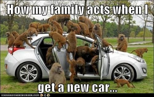 monkeys annoying cars family - 7012456192