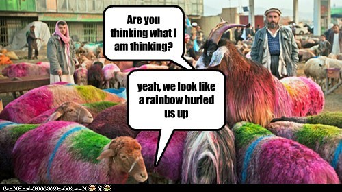 dyed thinking hurl sheep rainbow wool - 7013026048
