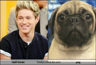 niall horan Totally Looks Like pug