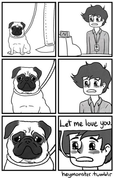 pug working love dogs - 7013203456