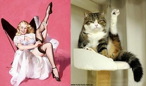 pose pinup sexy Cats leg - 7013312000