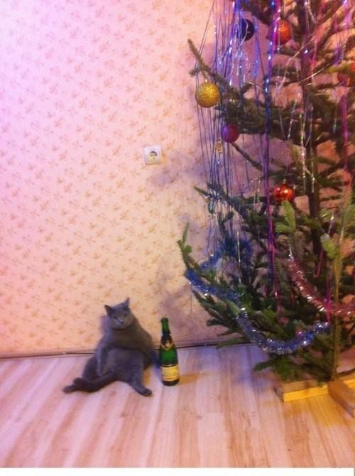 mittens cat crunk critters - 7013696512