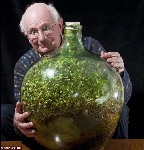 jar,garden,interesting,self sustaining