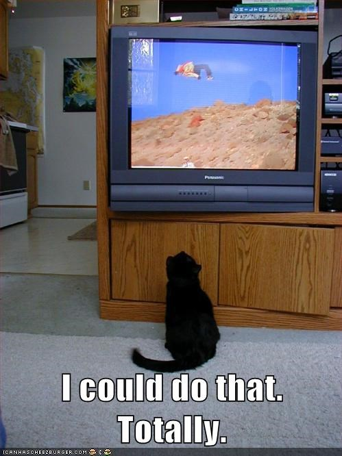 cat sports TV funny - 7013831680