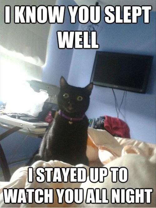 pets creepy stalker girlfriend cat sleeptimes Cats - 7013863168