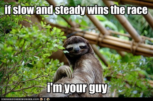 race,sloths,slow,slow and steady