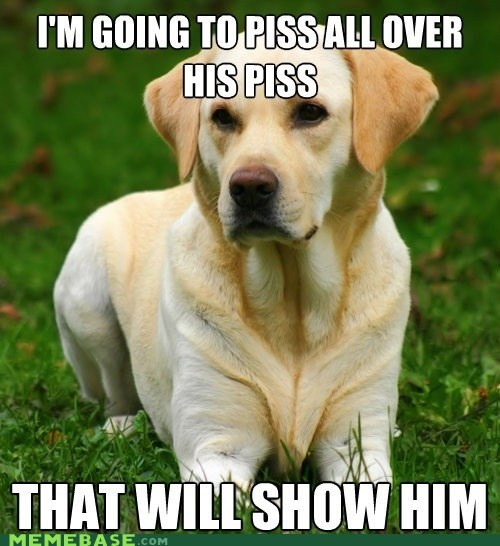 pets,peetimes,dogs