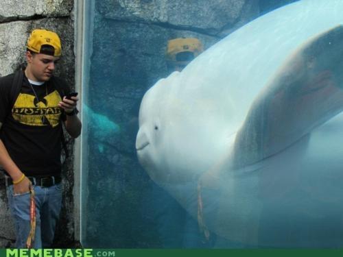 FAIL kids phone whale - 7013972480